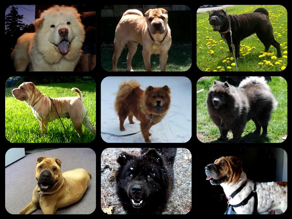 2016-adoptions-posting-1